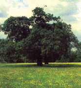 Tree on common